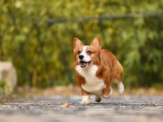 Improve Your Dog's Recall with Dog Training in Hamilton, VA