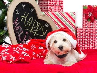 On December 3, Merry Manners:  A Free Holiday Dog Training Seminar for Leesburg, Hamilton, Purcellvi