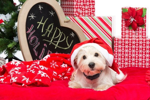 On the List for the Holidays in Leesburg: Dog Training in Manners
