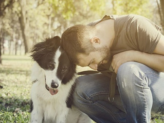 National Train Your Dog Month: Benefits of Dog Training