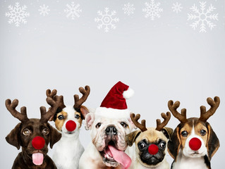 Exploring the Pitfalls of Getting a New Pet During the Holidays with Dog Training near Leesburg, VA