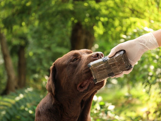 Develop Your Dog's Scent Skills with Nose Games for Hamilton Dog Training
