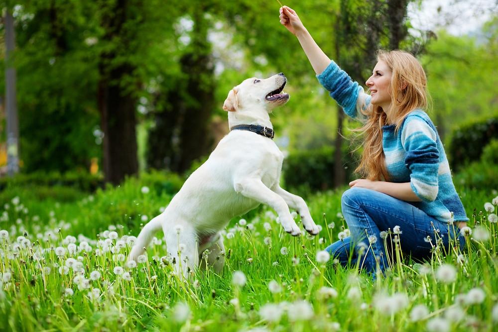 Local Trainer Hamilton Dog Training