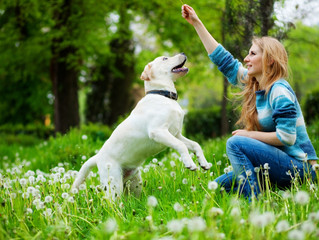 Your Local Trainer in Hamilton Dog Training Classes Shares Tips on How to Have Fun with Your Dog