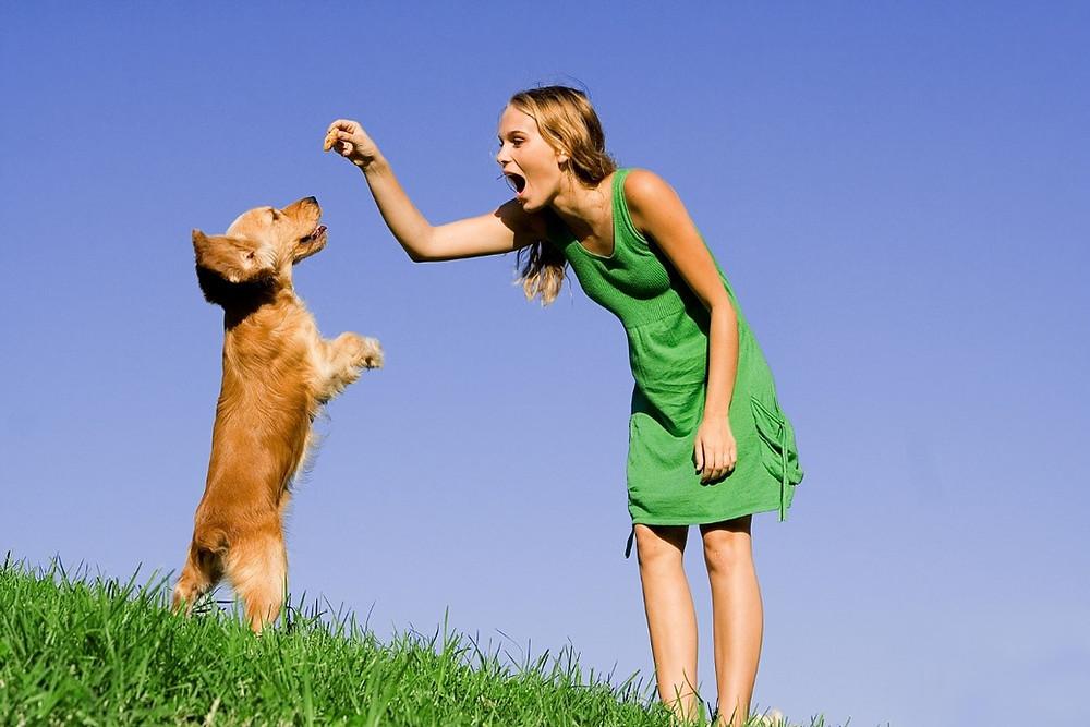 Hamilton Dog Training Classes