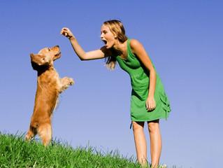 Exercise & Stimulation: Vital Components of Hamilton Dog Training Classes