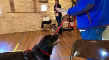 Enrich the Lives of Aging Dogs with Mental and Physical Leesburg Dog Training