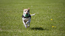 Springing Back to Action with Hearts in Harmony Dog Training: Three Dog Training Tips for the New Se