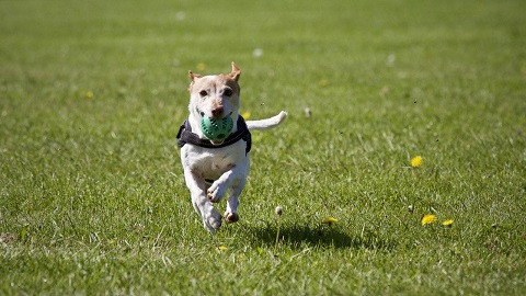 Dog Training Around Hamilton