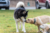 Start Your New Puppy Off on the Right Paw With Dog Training in Hamilton, VA