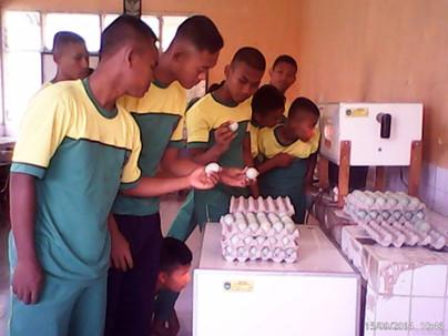 Pembelajaran Praktek Penetasan Telur Beb