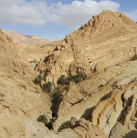 desert wild montagne oasis tunisia.png