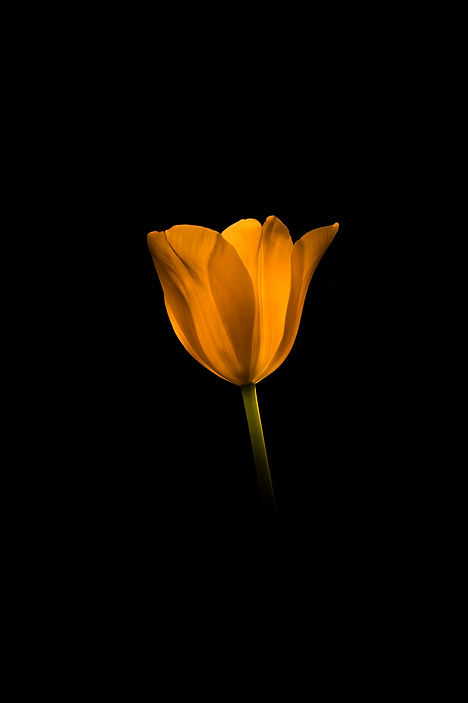 Flore_Fleurs_00002.jpg