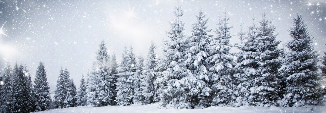 Rows-of-Christmas-trees-with-snow-fallin