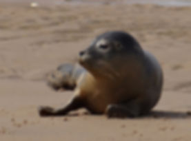 Norfolk seal trips