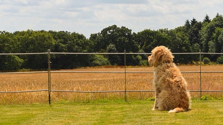 Quaker Barns │ dog-friendly holiday cottages in rural North Norfolk