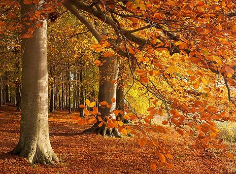 blickling autumn.jpg