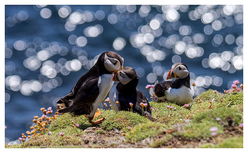 Third Wheel - my all time favourite shot from Saltee trip in 2015.