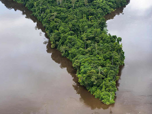 Building a Green Economy Could Stop 'Nightmare' Degradation of Amazon