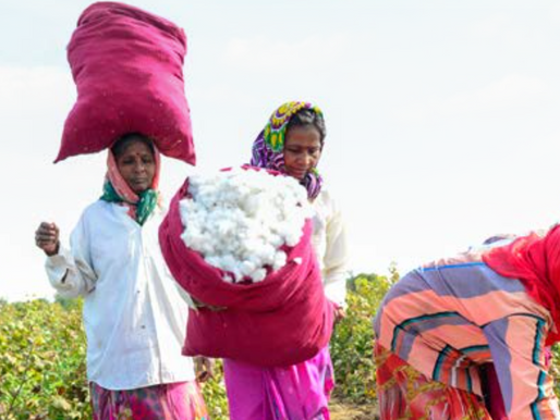 How Organic Cotton Delivers in a Water-Stressed World by Soil Association