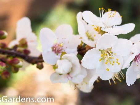 Garden Maintenance Fundamentals for S.F. Bay Area