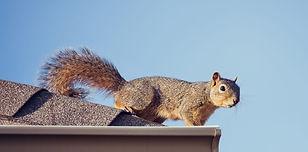 cropped-AAWC-Squirrel-Slide-2_edited.jpg