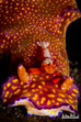 Not just a portrait - Lembeh gives you more