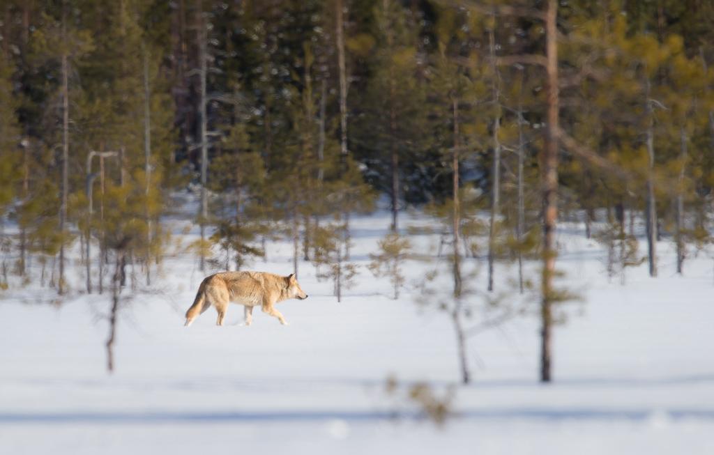 Finland Mars 2015