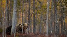 Möt rovdjuren när våren anländer till vildmarken!