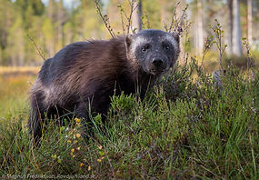 Fotoresor till Finland. Fotografera järv