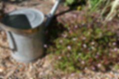 Bromley garden maintenance www.FernsGardens.co.uk