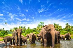 elephants-in-habarana