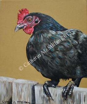 little black hen