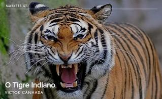 O Tigre Indiano