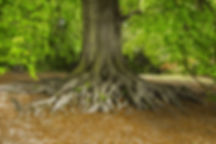Canva - Tree Roots in the Park.jpg
