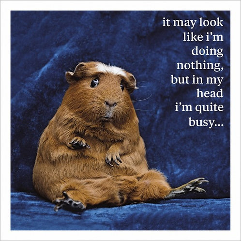Humorous card. Laidback Guinea pig.  Blank inside