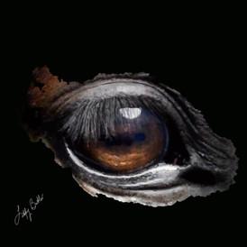 Black horse's eye