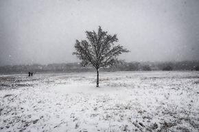 Lyons_1-10-21-SnowDayLR-9.jpg