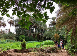 Zandvis Marokko Reizen Todrakloof Palmoa
