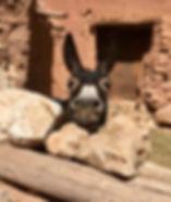 Zandvis Marokko Reizen Ezel