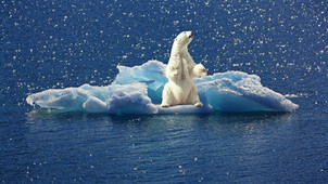 The Myth That the Polar Bear Population Is Declining