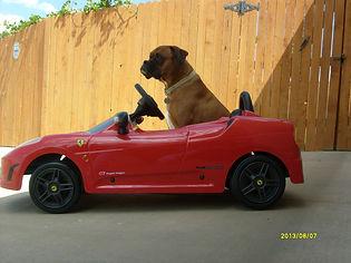 Marlee with car.JPG