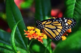 Sommerfugle betyder udvikling...
