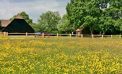 gildings barn exterior with buttercups.j