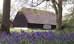 gildings barn exterior with bluebells.jp