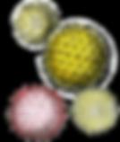 pollen45.png