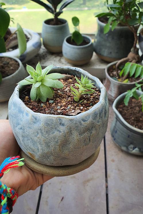 Pinch planter 12cm by 11cm w dish