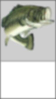 fish stocking.png