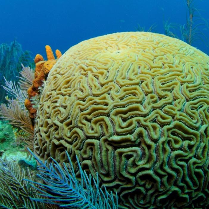 FREE Marine Science Series: Crustaceans