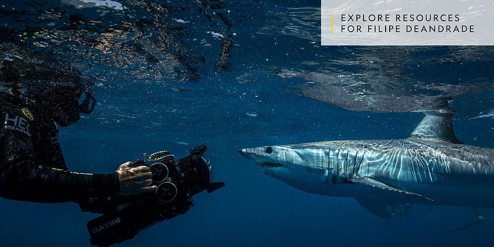 Sharks4Kids Presents: Filming Sharks with Filipe DeAndrade
